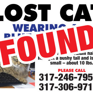 A lost cat sign with found stamped across it